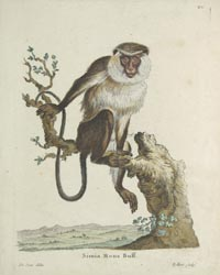 Geroge Edwards: Monkeys